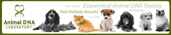www.animalsdna.com